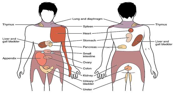Mapa del dolor referido de vísceras