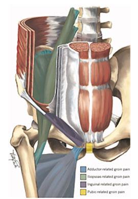 Músculos y huesos de la cadera